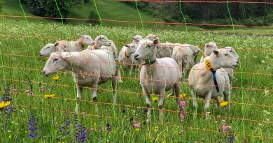 Herdenschutz in Tirol-15510.jpg - © European Wilderness Society CC BY-NC-ND 4.0