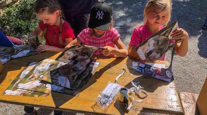 European Wilderness Society Zoo Salzburg-20447.jpg - © European Wilderness Society CC BY-NC-ND 4.0