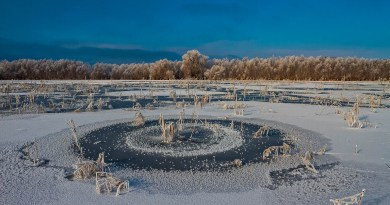 Danube_Parks_1089_Winter_frost_in_DDBR_-_Daniel_Petrescu.jpg - © Danube Parks All Rights Reserved