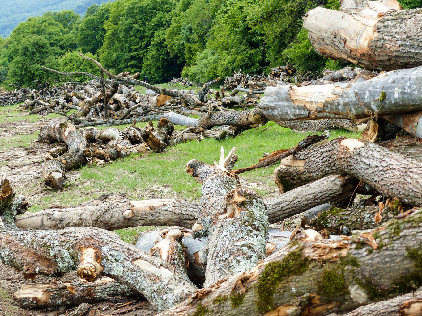 Deforestation Romania Hannes Knapp - © All rights reserved