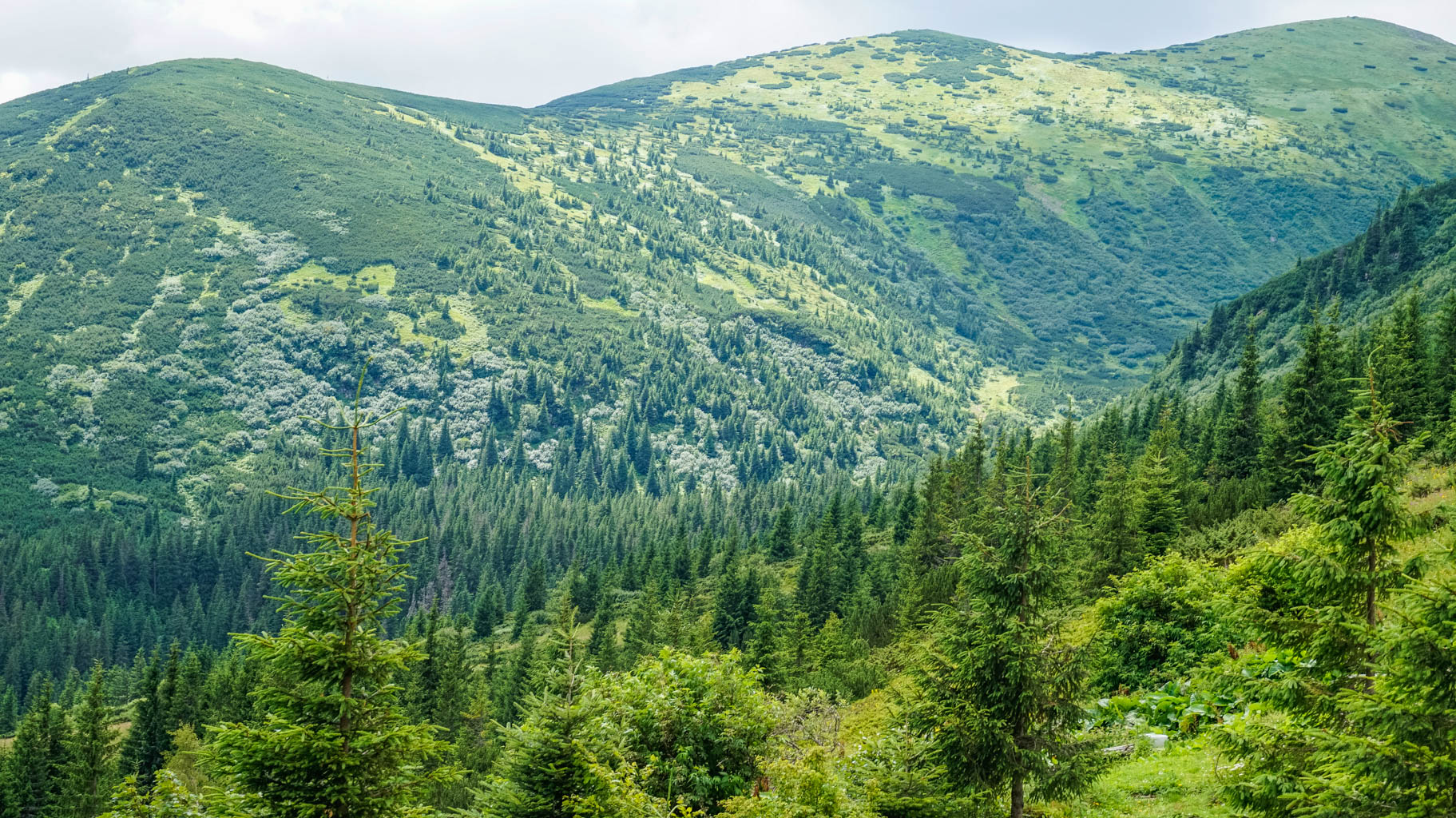 Hoverla Wilderness - © All rights reserved