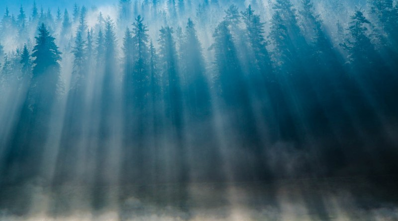 National Park Pirin - Forest- Alexander Ivanov.jpg - © European Wilderness Society CC BY-NC-ND 4.0