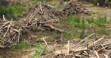 Ukraine Sanitary Logging Analysis - 6471.jpg - © European Wilderness Society CC BY-NC-ND 4.0