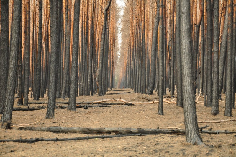 Forest Fire Treuebrietzen Brandenburg-22452.JPG - © European Wilderness Society CC BY-NC-ND 4.0