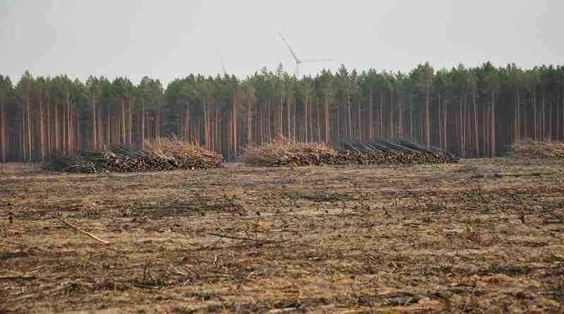 Forest Fire Treuebrietzen Brandenburg-22477.JPG - © European Wilderness Society CC BY-NC-ND 4.0