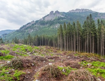 Logging in Slovakian protected areas-22729.jpg - European Wilderness Society - CC NonCommercial-NoDerivates 4.0 International