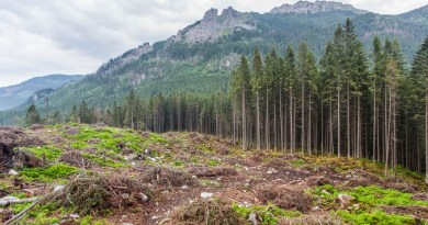 Logging in Slovakian protected areas-22729.jpg - © European Wilderness Society CC BY-NC-ND 4.0
