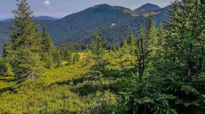 Maramarosh Wilderness Carpathian Biosphere Reserve-19846.jpg - European Wilderness Society - CC NonCommercial-NoDerivates 4.0 International
