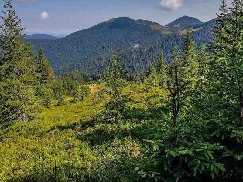 Maramarosh Wilderness Carpathian Biosphere Reserve-19846.jpg - © European Wilderness Society CC BY-NC-ND 4.0