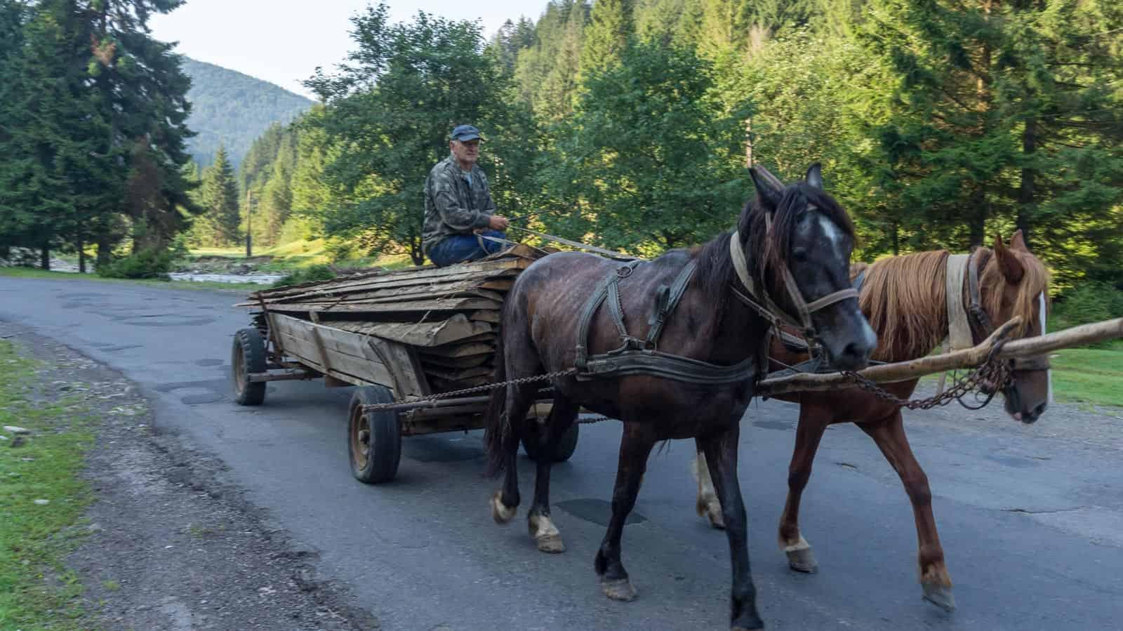 WILDArt NPP Synevyr Ukraine - © All rights reserved