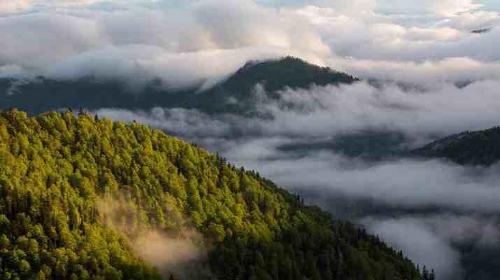 spring in fatra mountains-24745.jpg - European Wilderness Society - CC NonCommercial-NoDerivates 4.0 International
