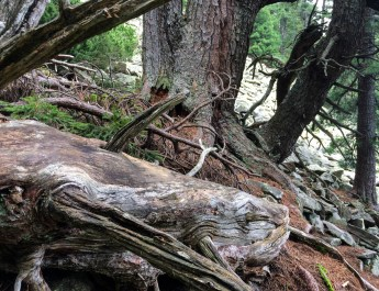 Gorgany Wilderness-25216.jpeg - European Wilderness Society - CC NonCommercial-NoDerivates 4.0 International