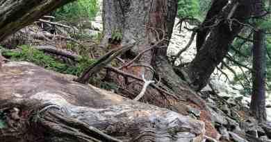 Gorgany Wilderness-25216.jpeg - © European Wilderness Society CC BY-NC-ND 4.0