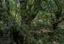 Kure-Daglari Wilderness-25934.jpg - © European Wilderness Society CC BY-NC-ND 4.0