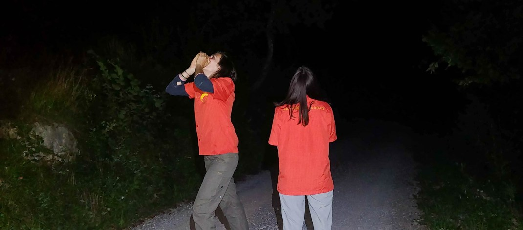 Howling for wolves in Slovenia