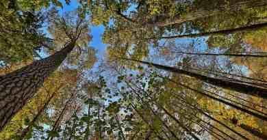 WILDForest Punos šilas-26094.jpg - © European Wilderness Society CC BY-NC-ND 4.0