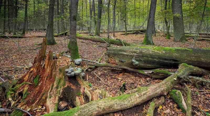 WILDForest Punos šilas-26097.jpg - © European Wilderness Society CC BY-NC-ND 4.0