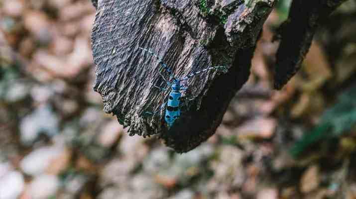 Synevyr Wilderness -BRandon Hartwig-26049.jpg - Brandon Hartwig - © All rights reserved