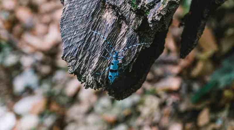 Synevyr Wilderness -BRandon Hartwig-26049.jpg - © European Wilderness Society CC BY-NC-ND 4.0