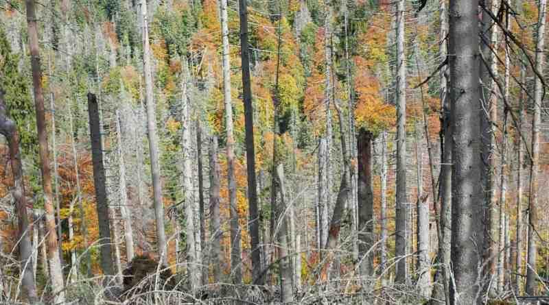 Gorczański National Park- 31099.png - © European Wilderness Society CC BY-NC-ND 4.0