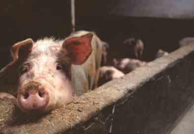 Our bias about livestock farming