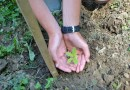 Healthy soil: good for you and for the planet