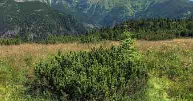 Jalovecka Wilderness versus logging