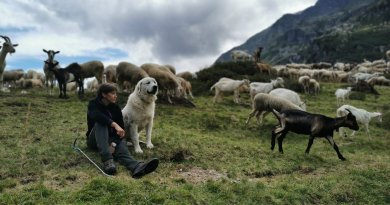 Conference: Shepherdesses in the Alps