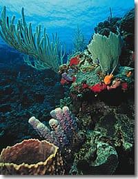 Belize Kayak Trips Itinerary 101