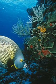 angel-fish-coral 15