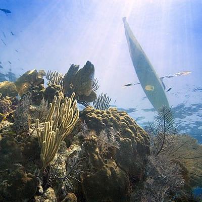 glovers-coral-kayaker