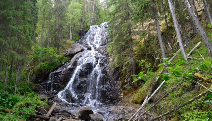 hike to Meåfallet, a 30 meter dropp and she's on her best in May+June.