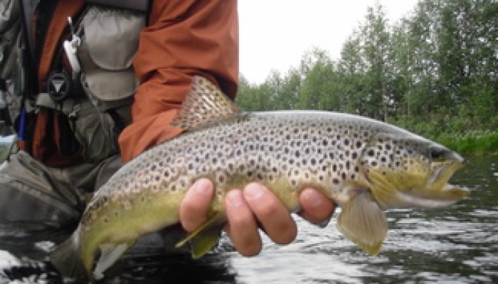 exclusive trout in our rivers