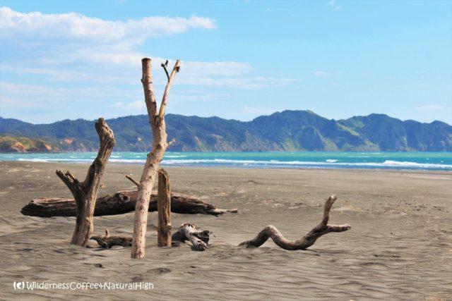 Kawhia beach, North Island, New Zealand