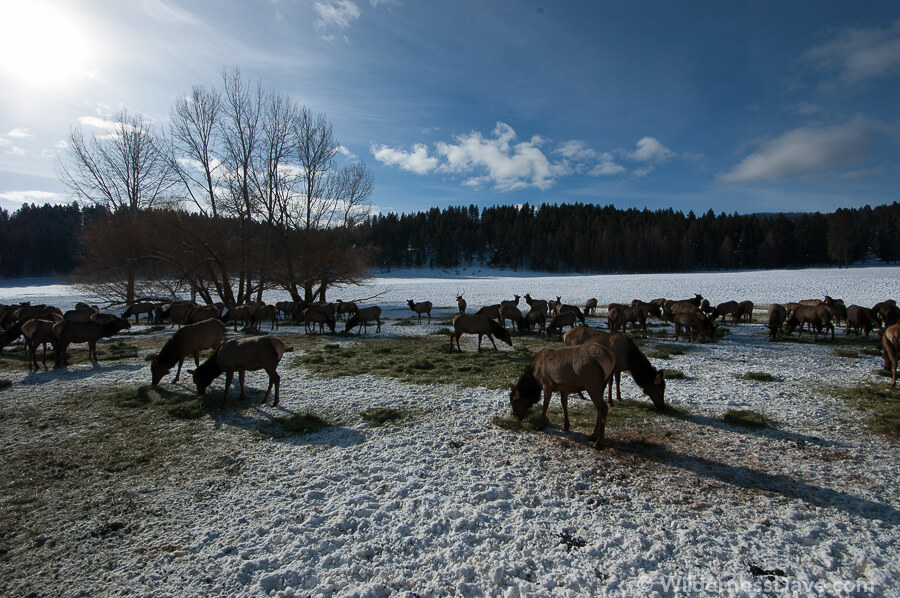 Elk Viewing in Baker, Oregon - Original Image - Photography