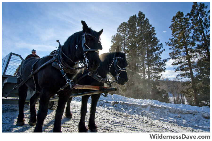 Winter in Oregon - Draft horses pulling the carriage at the Elk Viewing