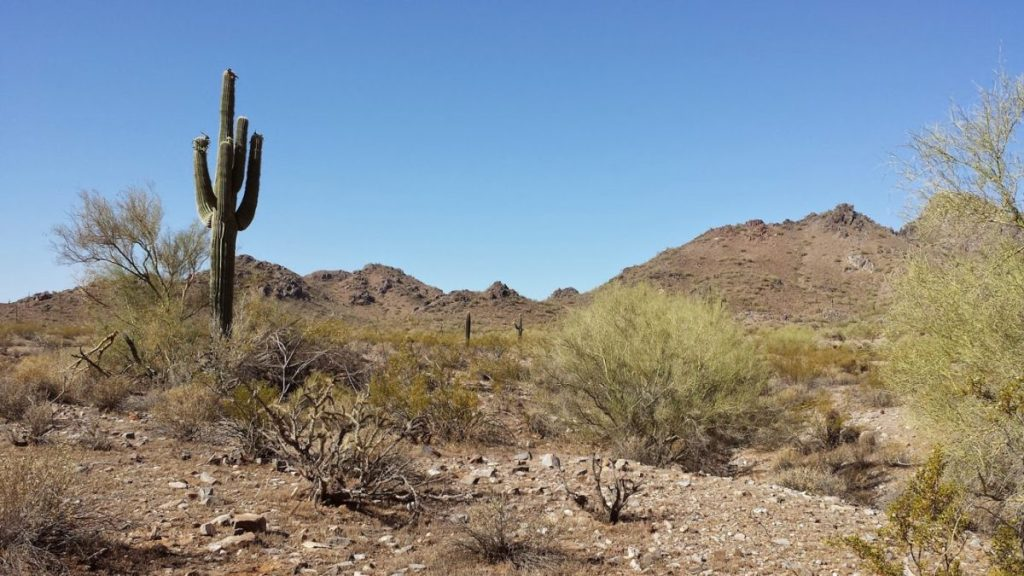 Phoenix Mountain Preserve Trail 100