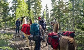 llamas-backpacking-10