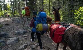 llamas-backpacking-3