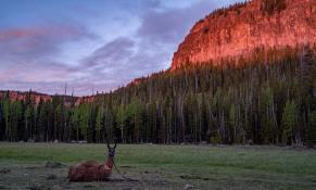 llamas-backpacking-6