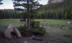 llamas-backpacking-8