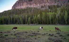 llamas-backpacking-9