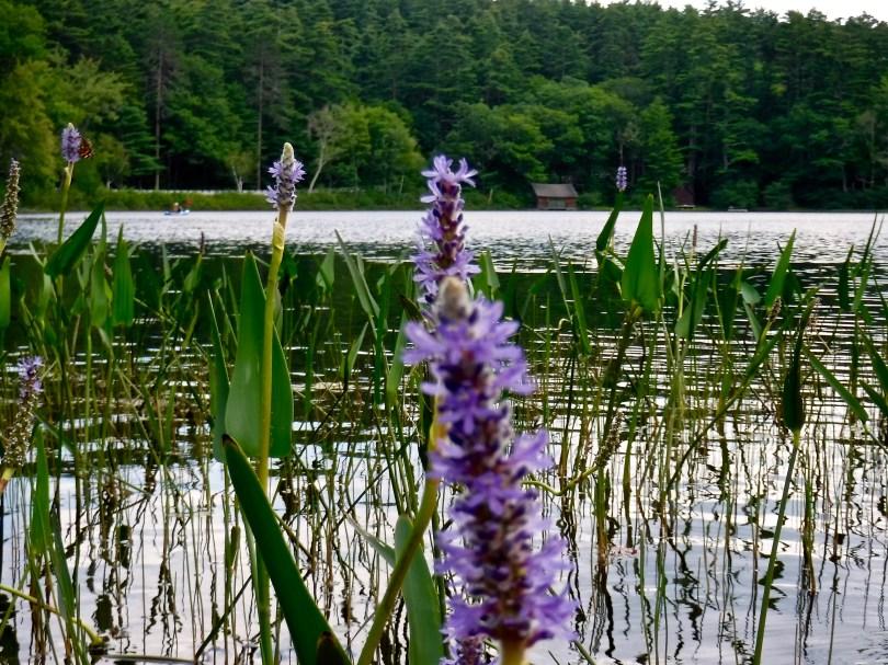 kayaking-little-lake-tamworth-nh