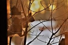 red-squirrel-in-sweden
