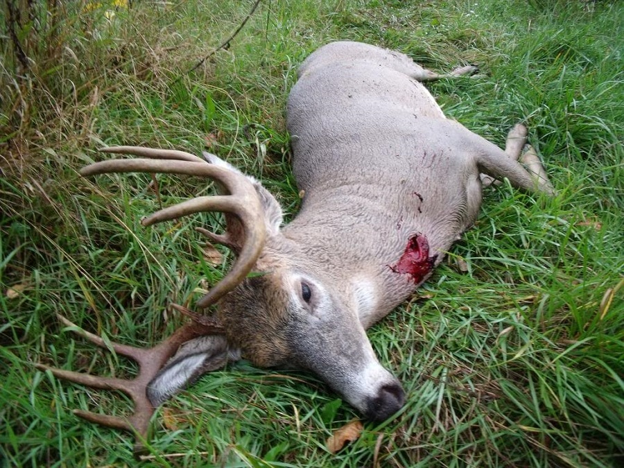 whitetail deer shot placement diagram sony cdx gt40uw wiring list of synonyms and antonyms the word: broadside