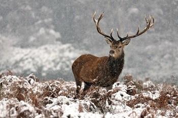 Deer Kill Zone in the Winter