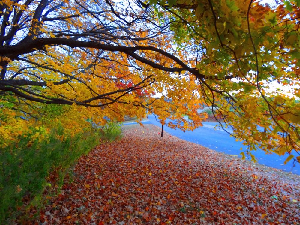 Fall Color 2012 Minnesota Arboretum (4/6)