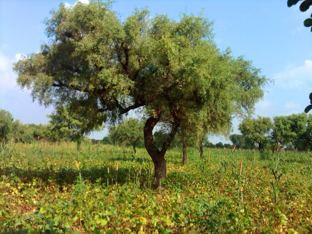 A visit to my Farm in Rajasthan (1/6)