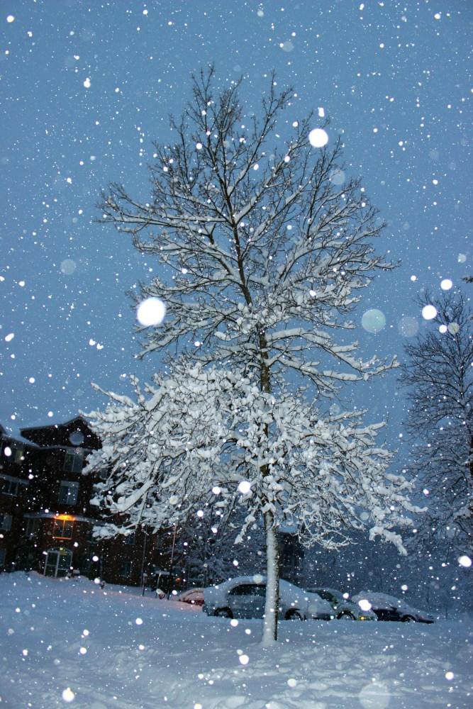 Minnesota Snow Fall December 2012 (6/6)