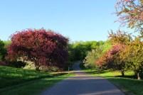 Three Miles Drive In Minnesota Landscape Arboretum